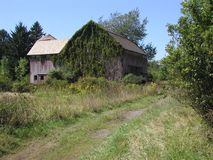 Dold ladugård för murgröna Royaltyfria Foton