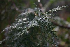 Dold lem för snö Royaltyfri Foto