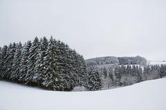 Dold pinjeskog för snö och snöig fält Arkivbild