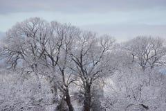 Dold skönhet för snö Arkivfoton