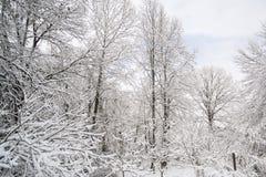 Dold skog för snö Arkivbilder