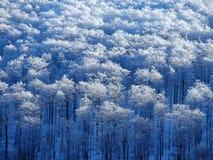 Dold skog för snö i Beskid berg Arkivfoto