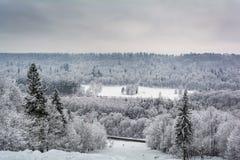 Dold skog för snö i Sigulda arkivbild