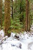 Dold skog för snö i staten Washington arkivfoto