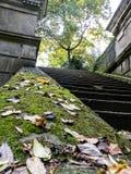 Dold trappuppgång för mossa och för blad Arkivfoton