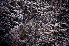 Dold treestam för Snow Arkivfoto