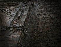 Dold vägg för mörk gotisk vinranka Arkivbild