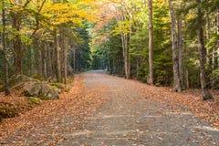 Dold vagnsväg för blad i Acadia Royaltyfria Bilder