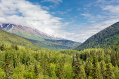 Dolda berg för evergreen i Alaska fotografering för bildbyråer