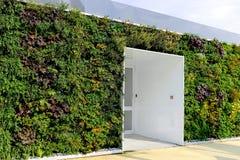 Dolda byggnadsväggar för flora med ingången Royaltyfria Bilder