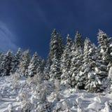 Dolda granar för snö royaltyfri foto