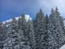 Dolda granar för snö arkivfoton
