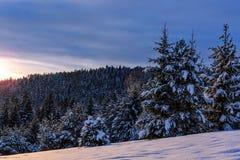 Dolda granar för snö Fotografering för Bildbyråer