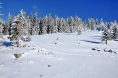 Dolda granar för snö i bergen Arkivfoto