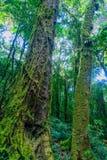 Dolda träd för mossa i regnskogen arkivbilder
