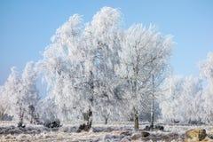 Dolda träd för rimfrost på en dunge arkivbilder