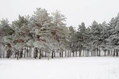 Dolda träd för snö Royaltyfri Bild