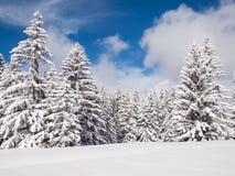 Dolda träd för snö Arkivfoto