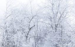Dolda träd för snö i en skog royaltyfria foton