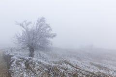 Dolda träd för snö i en skog arkivbild