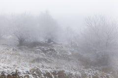 Dolda träd för snö i en skog royaltyfri bild