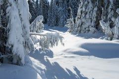 Dolda träd för snö i en vinterskog Arkivbilder