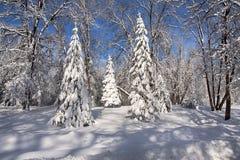 Dolda träd för snö i skogen arkivfoto