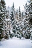 Dolda träd för snö i skogen Arkivbilder