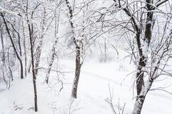 Dolda träd för snö i staden Sikten från fönstret under ett tungt snöfall royaltyfri fotografi