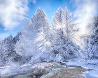 Dolda träd för snö med solstrålar på Mammoth Hot Springs Royaltyfria Bilder