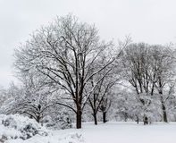 Dolda träd för snö mot himlen Arkivbild