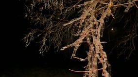 Dolda trädfilialer för rimfrost med iskalla blad Mörk natt för frysning i bakgrund Kylig natt stock video