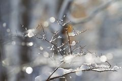 Dolda trädfilialer för snö och för is Royaltyfria Foton