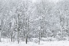 Dolda trän för vit snö i New England Royaltyfria Foton