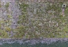 Dolda väggar för mossa och vallgraven Fotografering för Bildbyråer