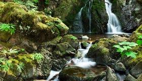 dolde falls Royaltyfri Bild