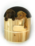 Doleful Dogs hang out of wooden barrel. Sad eyed labrador retreiver puppies hang out of a wooden barrel. A wooden name plate hangs by the paw of blonde puppy royalty free stock photography