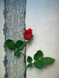 Doleful rose. Doleful red rose on the background royalty free stock photo