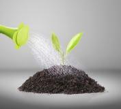 Dolewania podlewania puszka na rośliny wodzie Obrazy Royalty Free