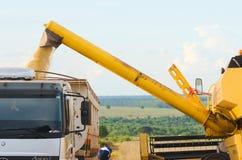 Dolewanie soje na ciężarówce po żniwa przyprawiają Zdjęcia Stock