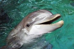 Dolfijn stock foto's