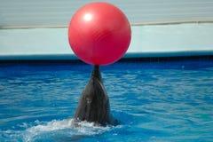 Dolfijn Royalty-vrije Stock Afbeelding