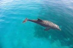 Dolfijn. stock foto
