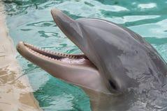 Dolfijn Stock Foto