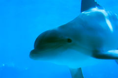 Dolfijn 4 Stock Foto's