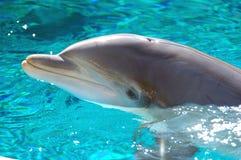 Dolfijn 4 van Bottlenose Stock Fotografie
