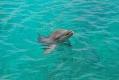 dolfijn Stock Afbeelding