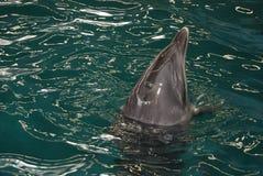 Dolfijn 2 stock fotografie