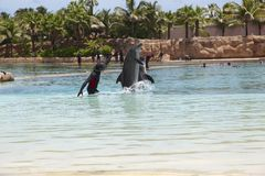 Dolfijn bij het Atlantis-hotel Royalty-vrije Stock Afbeeldingen