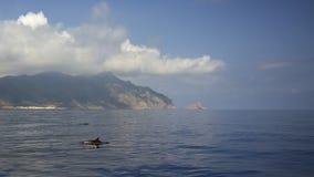 Dolfijn bij Marettimo-eiland Sicili?, Egadi-archipel Itali? royalty-vrije stock afbeelding